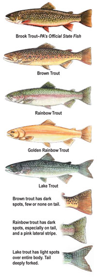Summary book trout fishing regulations for Fishing in pa