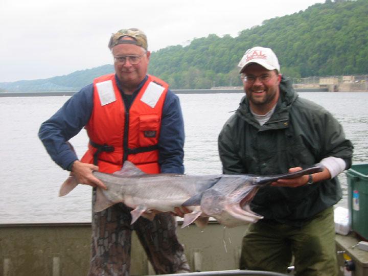 2005 biologist report paddlefish restoration for Pa fish records