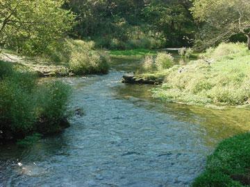 2006 biologist report big spring creek for Spring creek pa fishing report