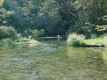 Pfbc 2007 biologist report big spring creek for Spring creek pa fishing report